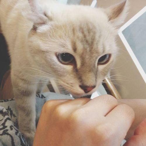 Hello World lovely cat.iPhone4s