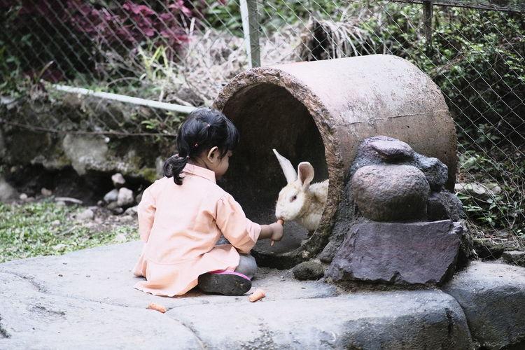Cute girl feeding carrot to rabbit outdoors