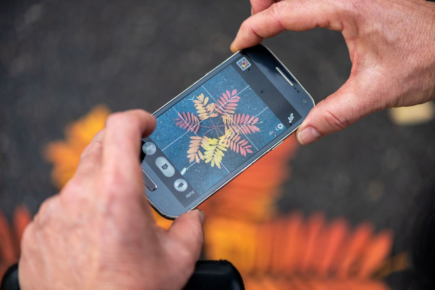 Capturing autumn... Human Body Part Fragility Botany Plant Part Mobile Phone Smart Phone Leaf Leaves Arranged Autumn Autumn Leaves Fall Fall Colors Fallen Leaves Taking Photos Nature Human Hand Holding Close-up Touch Screen Interactivity Mobile App Device Screen Digital Viewfinder Digital Display Multimedia Computer Software Cellphone Photographing
