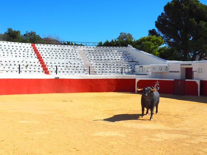 SPAIN Andalusien Mijas Arena Museum Bull Statue Building Exterior No People Building Sky Day Plant Nature Dog Tree Architecture Built Structure Vertebrate Sunlight Domestic Domestic Animals One Animal Animal Themes Animal Mammal