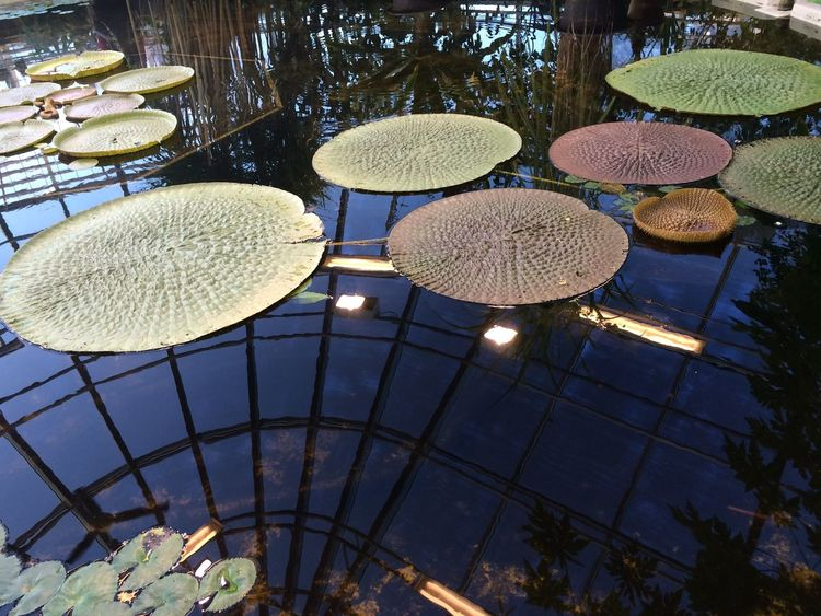 Greenhouse In The Greenhouse Tropical Greenhouse Uppsala, Sweden Glasshouse Tropical Tropical Rainforest Water-lilies Waterreflections  Water_collection Water Reflections Lights