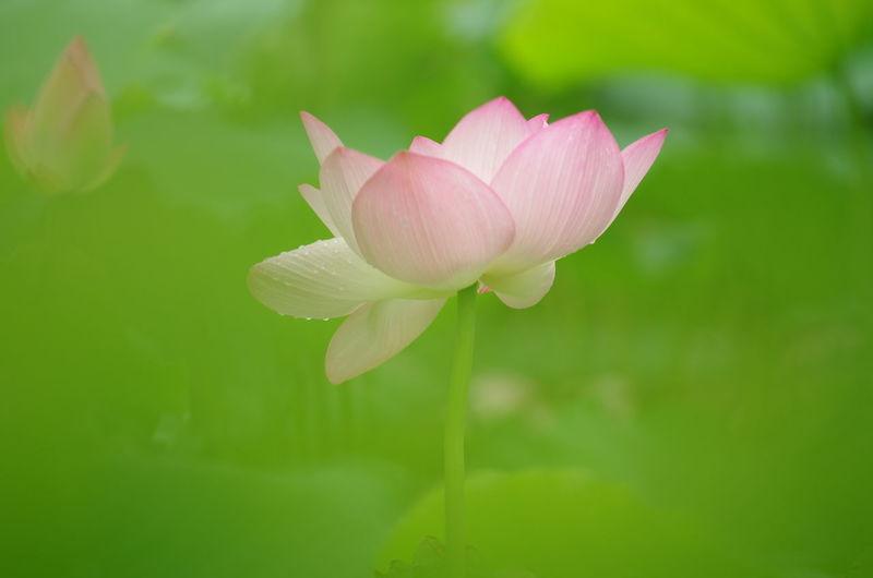 Close-up Beauty In Nature Freshness Fragility Lotus Flower Water Lily Plant Leaf Flower Lotus Water Lily EyeEm Nature Lover Shenzhen Nature EyeEm Gallery EyeEm Best Shots EyeEm Park