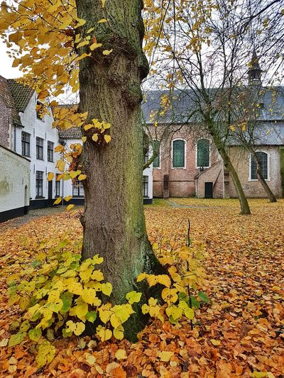 Tree Autumn Leaf Change Day Outdoors Architecture Built Structure