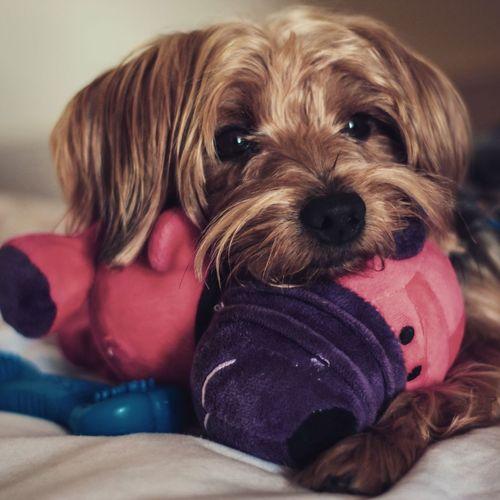 My dog Canon