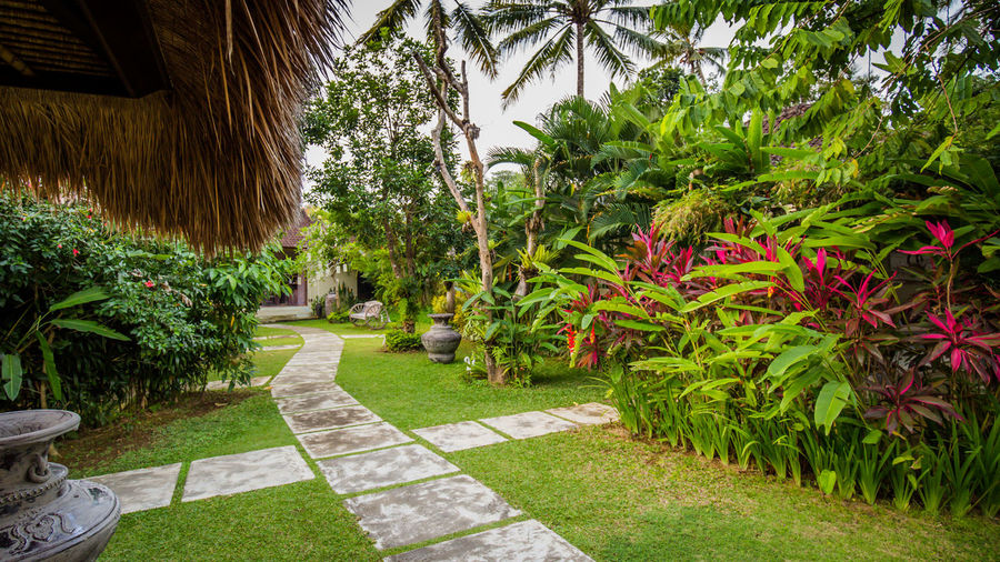 In a Resort Beauty In Nature Botanical Garden Day Flower Footpath Formal Garden Freshness Garden Garden Path Green Green Color Growing Growth Hedge Landscaped Lawn Nature Outdoors Park Park - Man Made Space Plant Resort Tranquil Scene Tranquility Ubud, Bali The Traveler - 2018 EyeEm Awards