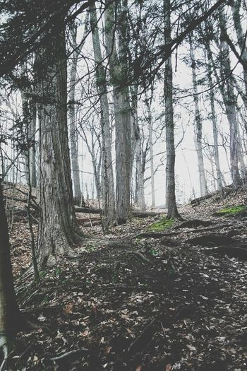 Landscape Forest Outdoors Tree Nature Growth Sky Branch Day Photography First Eyeem Photo