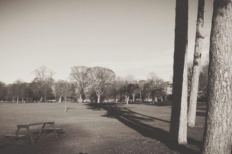 Landscape Trees Park Blackandwhite