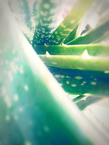 Mint By Motorola Taking Photos Naturelovers Nature Photography Beautiful Nature Taking Photos Check This Out Greenpeace Aloevera Flower Aloevera
