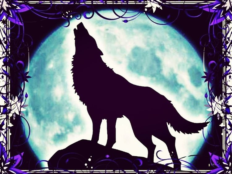 Wolf Full Moon Howling At The Moon Beautiful Scenery