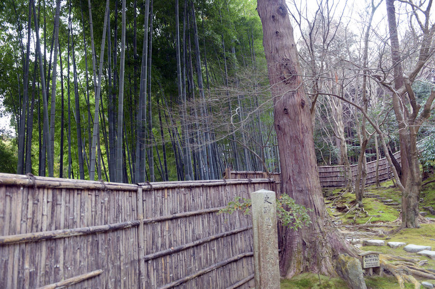 Bamboo - Plant Barrier Beauty In Nature Boundary Day Fence Forest Green Color Growth Land Nature No People Non-urban Scene Outdoors Plant Tranquility Tree Tree Trunk Trunk Wood - Material WoodLand