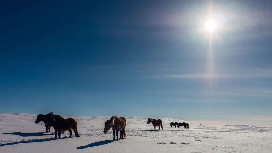 Horses on snow covered land against sky