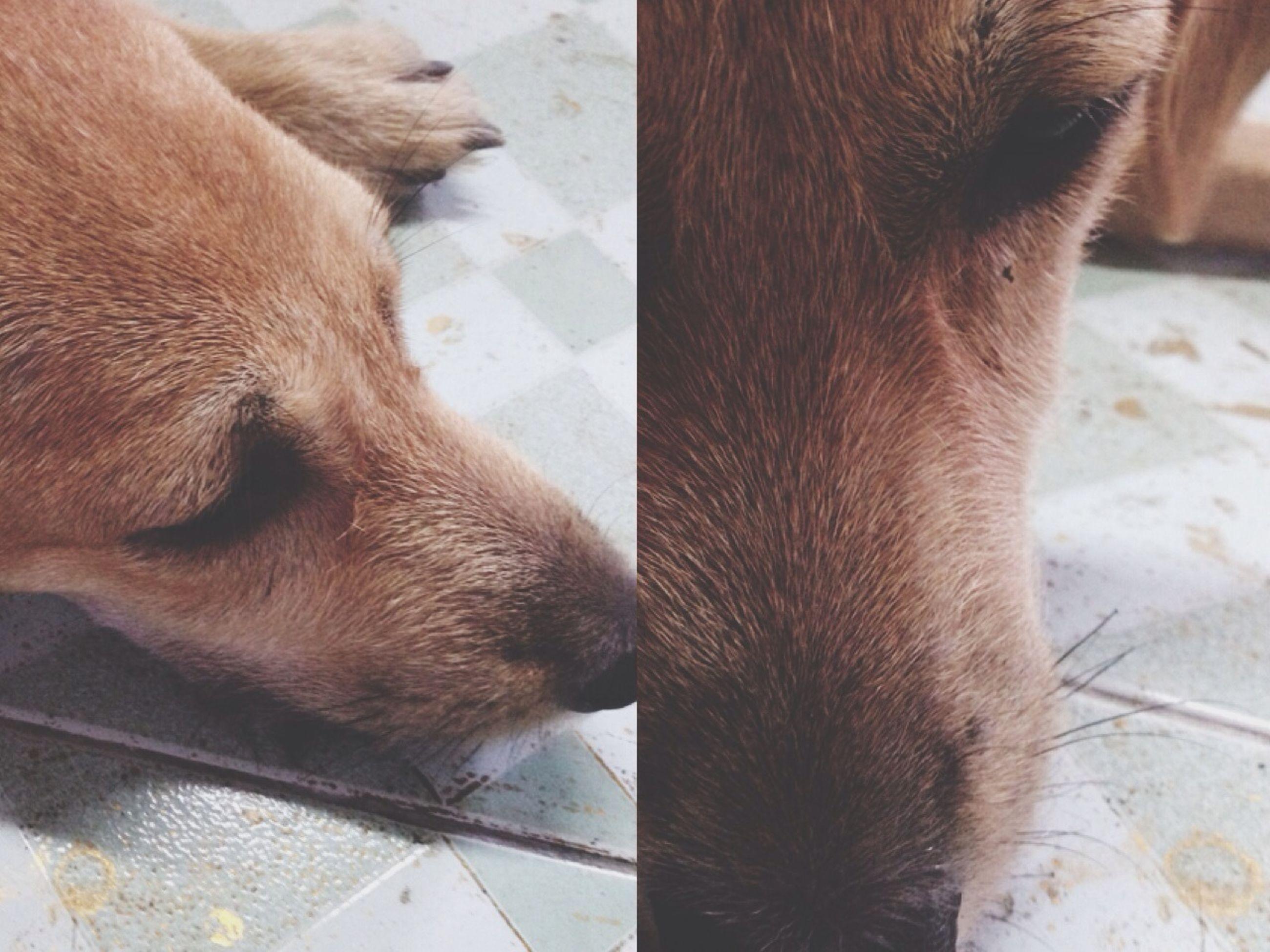 animal themes, domestic animals, mammal, one animal, animal head, animal body part, livestock, pets, indoors, close-up, part of, vertebrate, brown, two animals, animal, dog, zoology, horse, herbivorous, day
