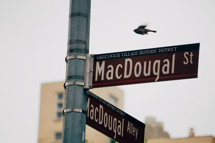 MacDougal street, Greenwich Village MacDougal, NYC Street Bird Greenwich Village NYC Manhattan Road Sign Communication Guidance Text City Western Script Sky Close-up Architecture Built Structure Directional Sign Street Name Sign Traffic Arrow Sign Information Sign Information Signboard Information Symbol Road Warning Sign