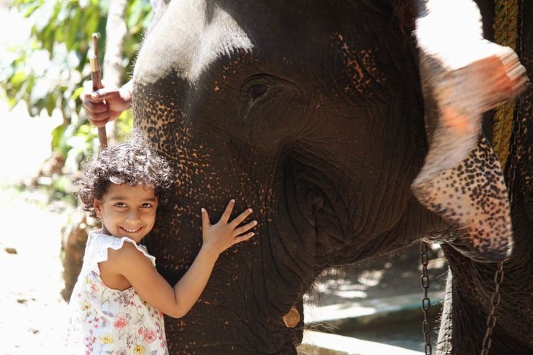 Hugging An Elephant Kerala Elephant