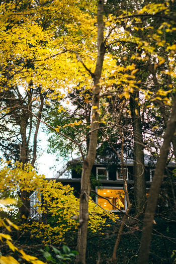 Yellow flowering plants and trees during autumn