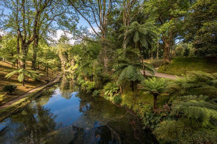 Terra Nostra Park, Furnas, Açores Açores Furnas Green Nature Path Portugal Relaxing Sao Miguel Terra Nostra Park Tranquility Travel Cozy Day Forest Growth Landscape Nature No People Outdoors Park Plant Tourism Tranquility Tree Water