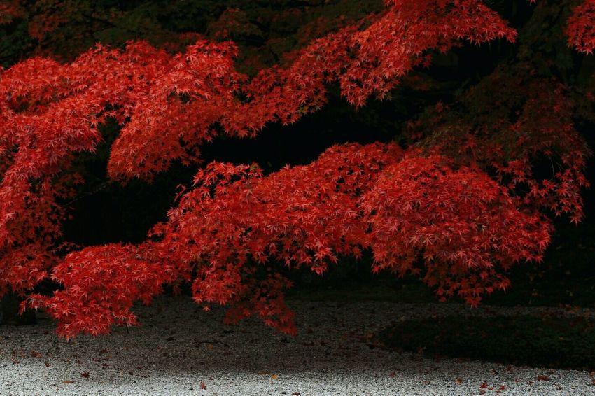 Kyoto Kyoto, Japan 紅葉 もみじ Japan Photography Autumn Colors Colors Of Autumn