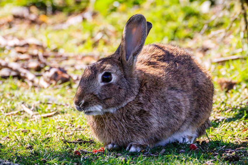 50+ Rabbits Pictures HD | Download Authentic Images on EyeEm