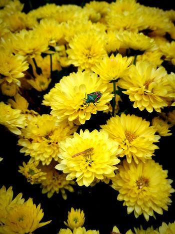 Leafy bug Flower Head Flower Yellow Petal Close-up Plant