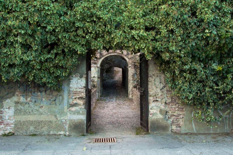 Door Castle Cobblestone Green Grating Ivy Wall Medioeval