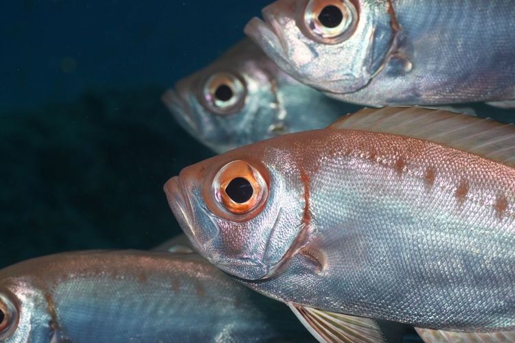 Fish Explore Submerged SCUBA Life Dive Ocean Travel Detail Ponta Do Ouro Mozambique