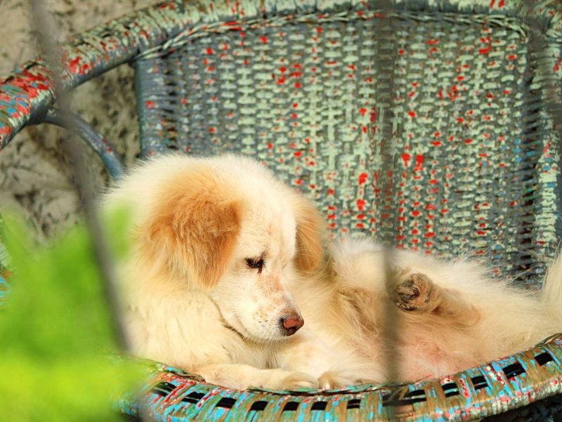 Always Be Cozy Dog Cozy Corner Furry