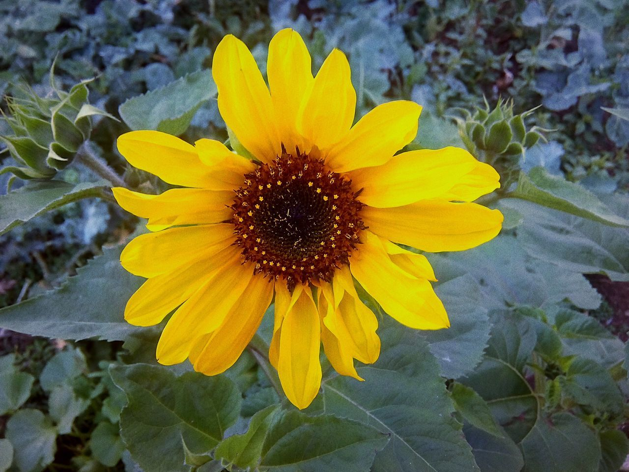 flower, yellow, petal, fragility, flower head, beauty in nature, nature, freshness, growth, plant, blooming, pollen, day, no people, outdoors, springtime, close-up, black-eyed susan