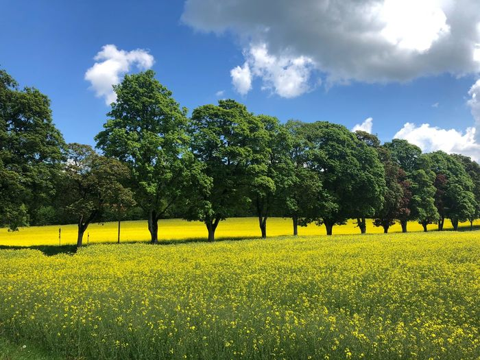 Scenic view of field by trees against sky
