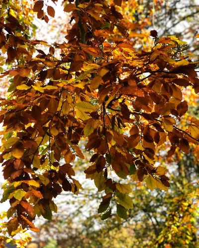 Herbst 🍂 im