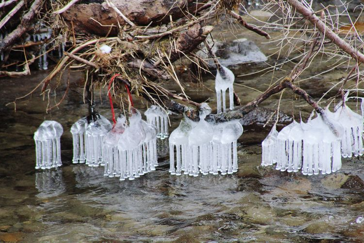 Icicles hanging from tree in forest during winter