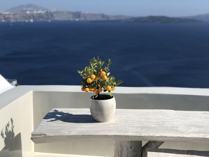 Potted plant on table by sea