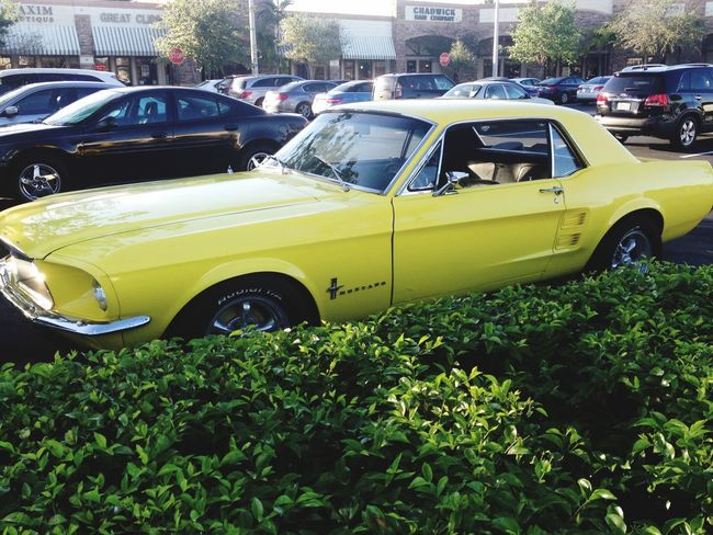 Justchillin Beautiful Vintagecar Fordmustang