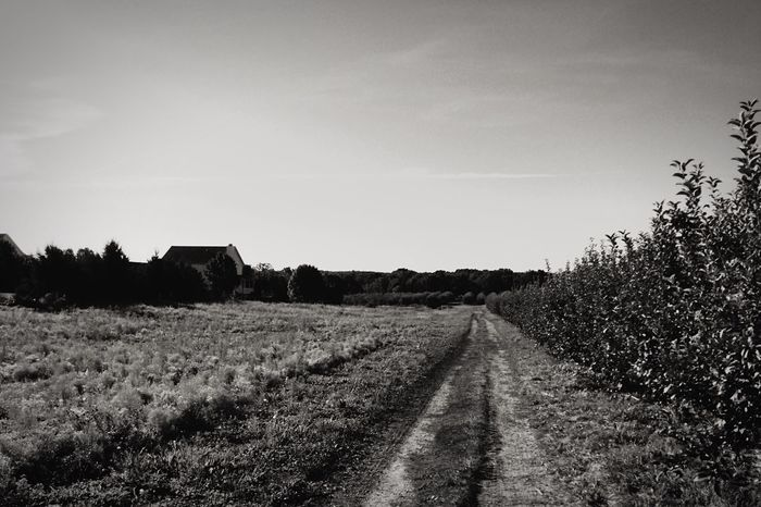 The Way Forward Landscape Dirt Road Tranquil Scene Tranquility Sky Non-urban Scene Field Diminishing Perspective Long Nature Surface Level Day Outdoors Vanishing Point Rural Scene Narrow Countryside Black And White Scenics