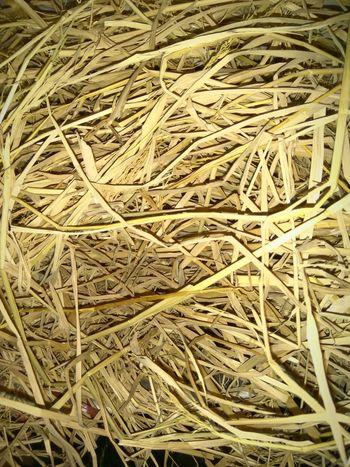 Dryness Dry Grass Dry Grass Jumbled Depth Birdeyeview Brown