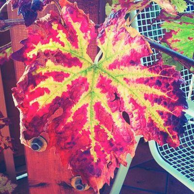 The #Grape #Leaf Leaf Grape