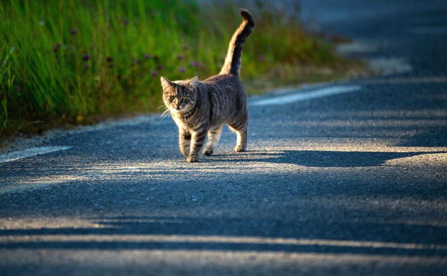 Bönhamn Högakusten Cat Cats Sweden