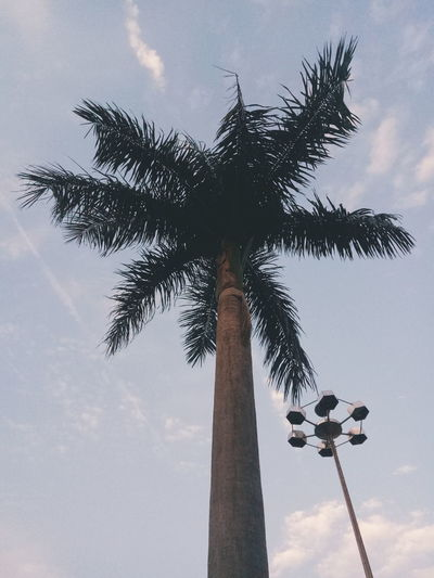It'scool. Longhai Zhangzhou Fujian Palm Tree Tall - High Sky Low Angle View