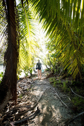 young woman walking under palm trees French Polynesia Travel Adventure Day Direction Forest Full Length Growth Land Leisure Activity Nature One Person Outdoors Pacific Ocean Palm Tree Plant Rear View Travel Tree Tropical Climate Walking Young Woman The Great Outdoors - 2018 EyeEm Awards