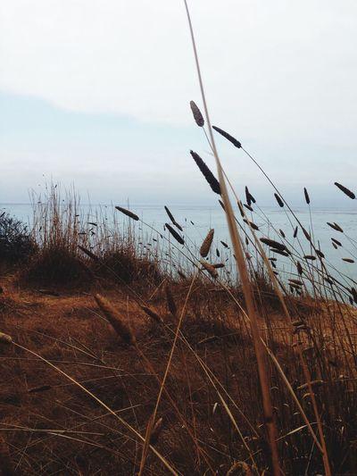 Hello World life] Sight August Beachphotography Fields