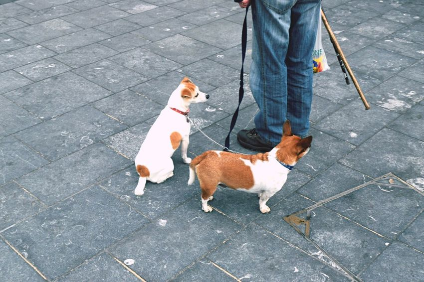 Patience   Taking Photos Outdoors Urbanphotography Streetphotography Animals Dog People Walking Around Eye4photography  Exploring