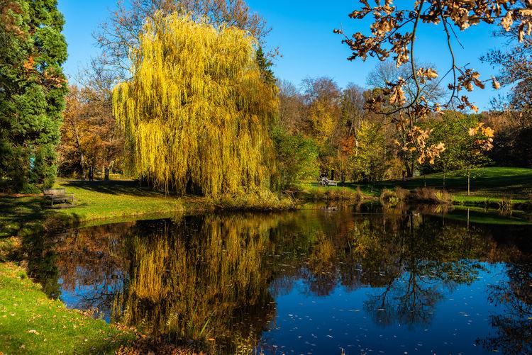 Park, lake,