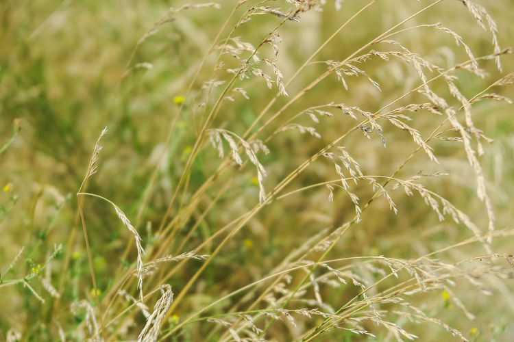 grass weed growing along the road Plant Growth Beauty In Nature Nature Selective Focus Close-up Day No People Field Focus On Foreground Land Tranquility Green Color Outdoors Fragility Freshness Vulnerability  Agriculture Crop  Sunlight Blade Of Grass