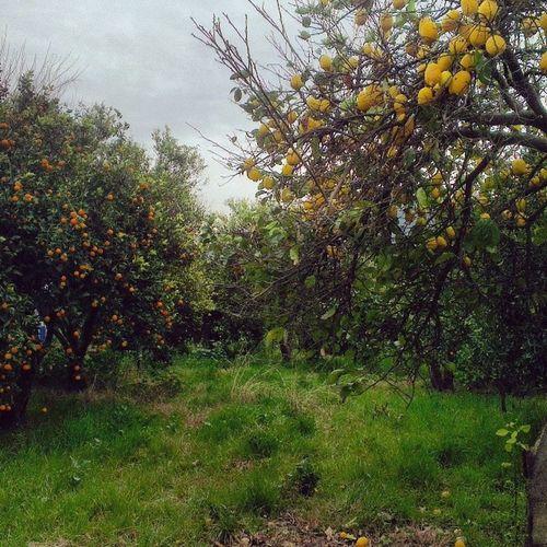 Lemontree Tangerinetree Farm Holiday