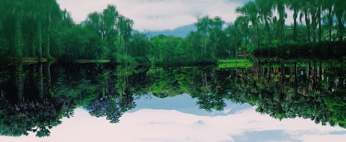 Reflection Lake Water Standing Water Tree Nature Outdoors Beauty In Nature No People Day Symmetry Sky