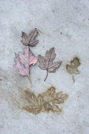 Leaves Autumn Autumn colors Concrete Concrete Floor Imprint Natural Pattern Tree Urban Nature EyeEmNewHere