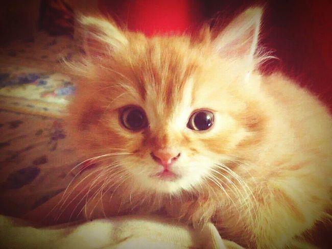 My little Cheetos Love ♥ Cat Lovers Beauty First Eyeem Photo