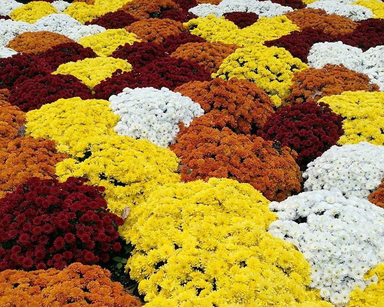 November (2016) Spawned a Monster. Yellow Textured  No People Outdoors Yellow Color Flower Flowers Chrysanthemum Garden Chrysanthemum