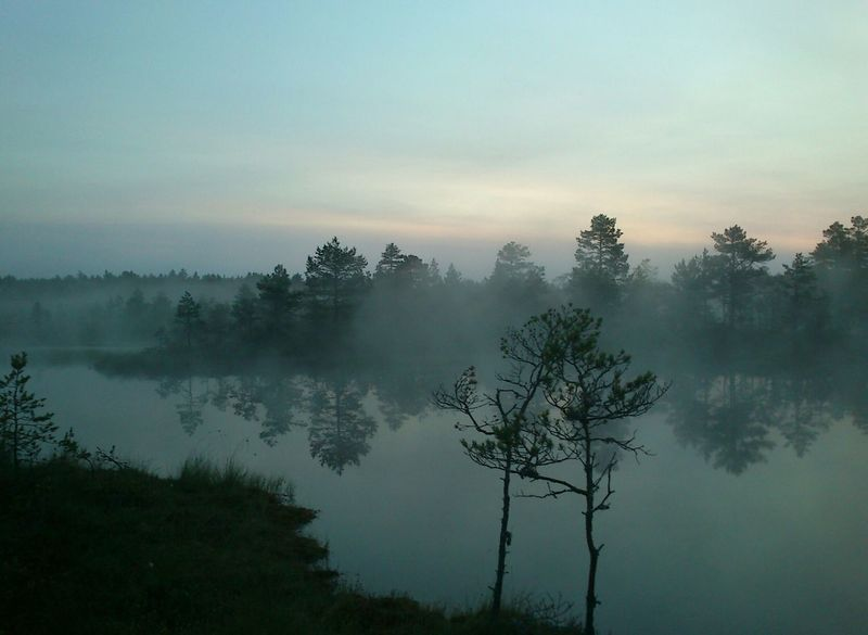Two of us 5am Beauty In Nature Bog Cloud - Sky Estonia Estonian Nature Fog Hazy  Idyllic Lake Landscape Morning Nature No People Outdoors Scenics Sky Summer Summer Morning Sunrise Tranquil Scene Tranquility Tree Viru Bog Water The Secret Spaces The Great Outdoors - 2017 EyeEm Awards Neighborhood Map Breathing Space Your Ticket To Europe Lost In The Landscape