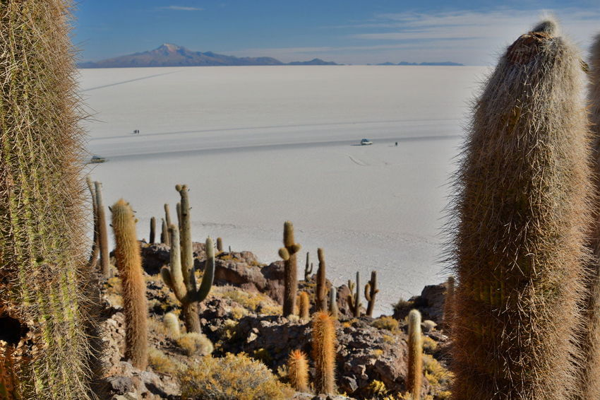 Salar de Uyuni view from Isla Incahuasi. Bolivia Andes Andes Mountains Arid Climate Beauty In Nature Bolivia Cactus Desert Landscape Deserts Around The World Eyeem Bolivia Incahuasi Isla Incahuasi Landscape Nature No People Outdoors Plant Salar De Tunupa Salar De Uyuni Salt Flats Scenics Travel Travel Destinations Uyuni Uyuni Salt Flat