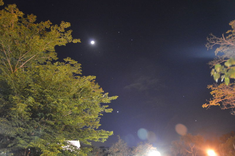 Low angle view of plants against sky at night